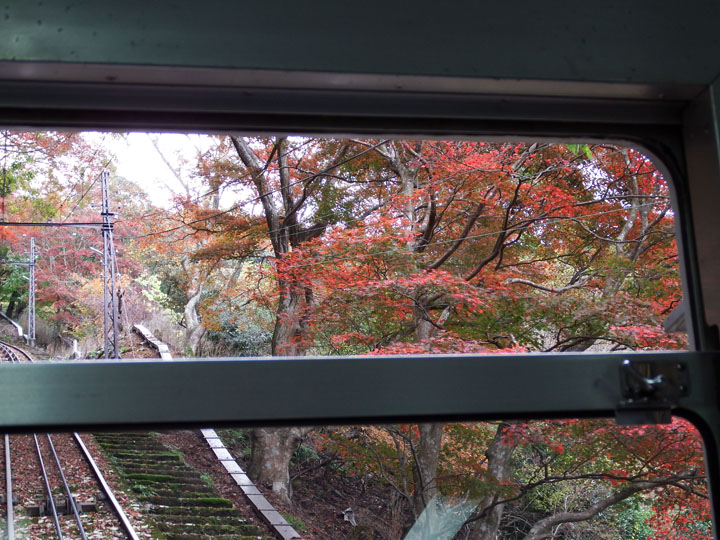 ケーブルからの紅葉.jpg