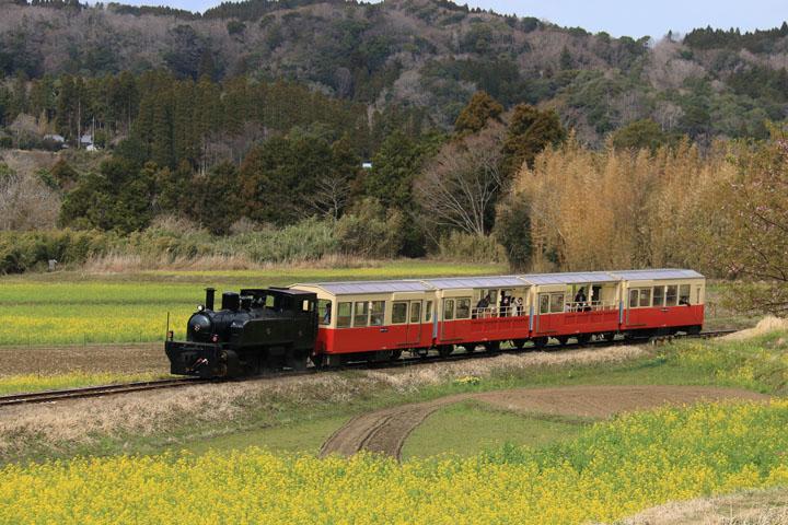 トロッコ電車.jpg