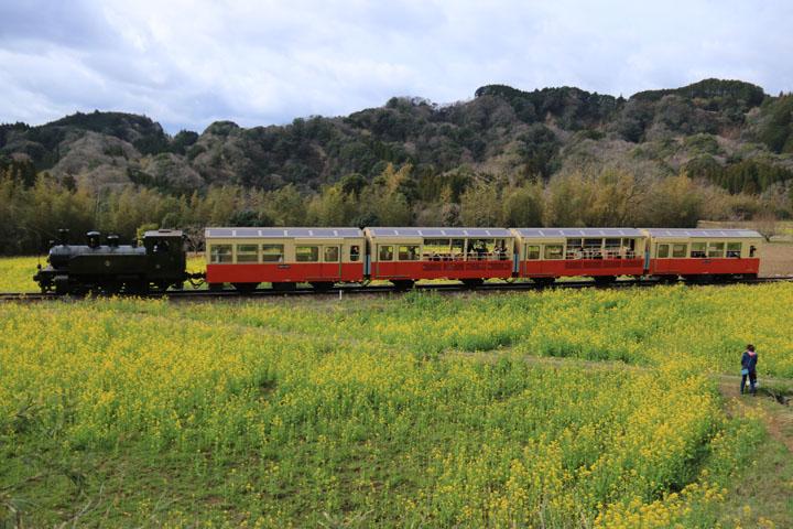 トロッコ電車2.jpg