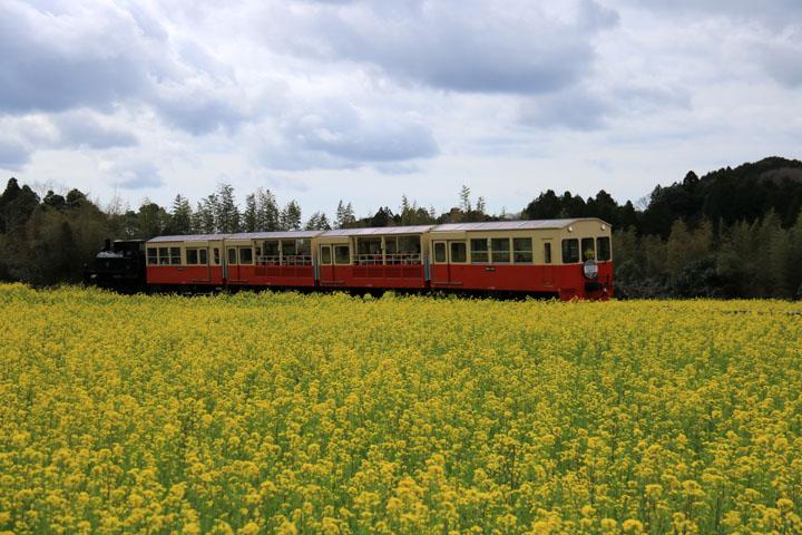 トロッコ電車3.jpg