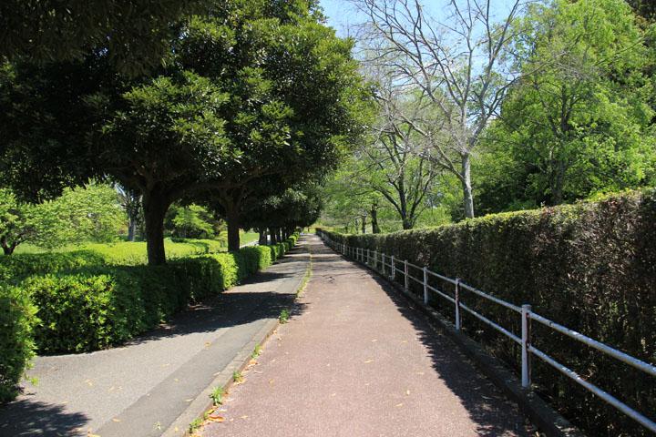 昭和の森.jpg