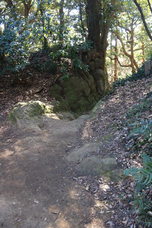 登り道.jpg